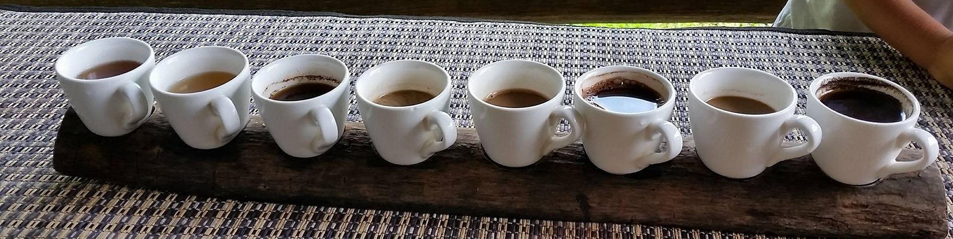 kaffee von katzen